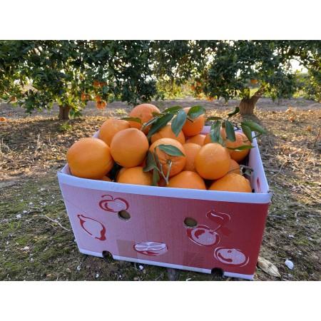 45kg Naranjas de Mesa/Zumo