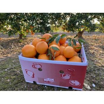 Naranjas de Zumo 15kg Variedad Navel Lane-Late
