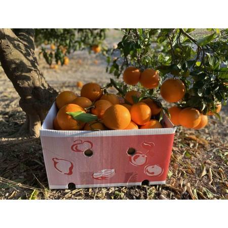 15kg Naranjas ZUMO